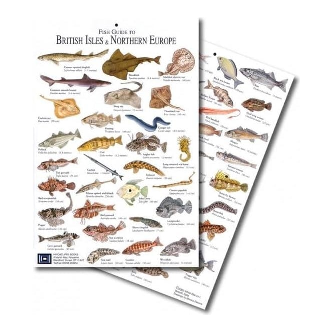 British Isles Fish Card