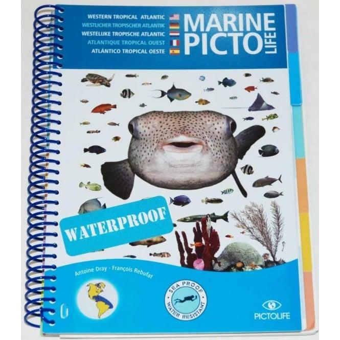 Marine Pictolife Western Tropical Atlantic