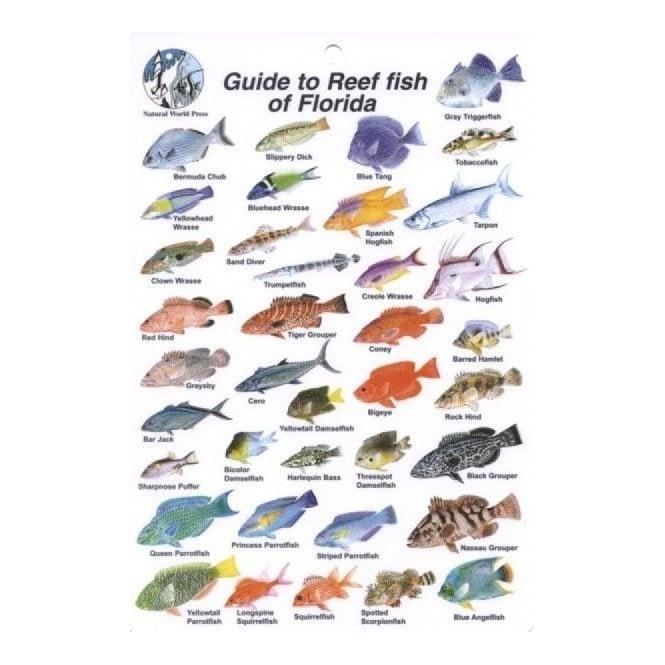 Florida Fish Card