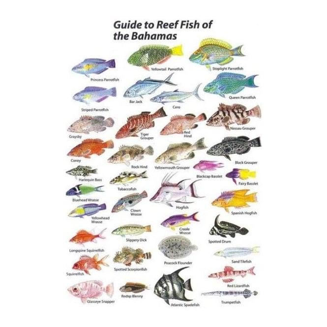 Bahamas Fish Card