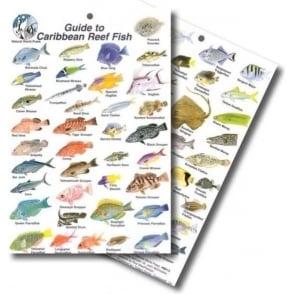 Caribbean Fish Card