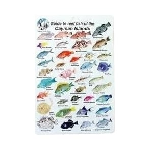 Cayman Islands Fish Card