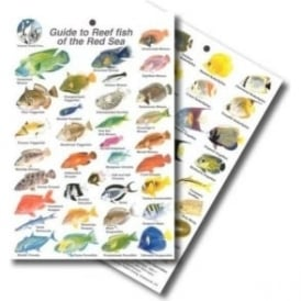 Red Sea Fish Card