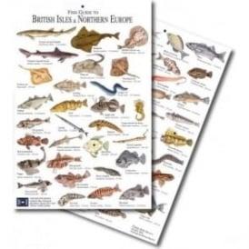 British Isles Fish Card