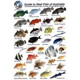 Australia Fish Card