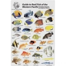 Reef Fish of the Western Pacific Fish Card
